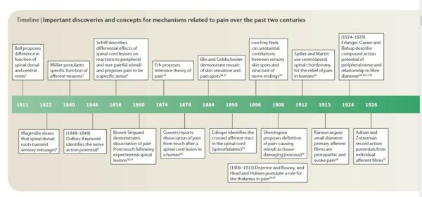 timeline of pain theories from Edward Perl, Ideas about Pain